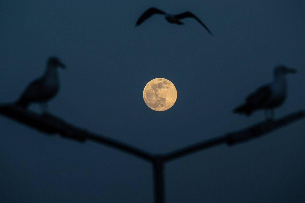 Gulls fly over the Bosphorus Strait as the pink supermoon rises in Istanbul, Turkey