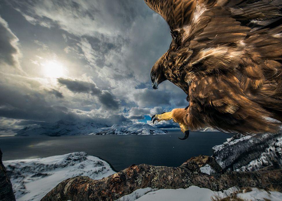 """Tierra del águila"" de Audun Rikardsen"