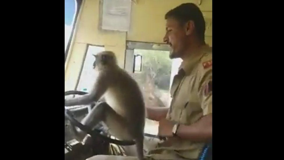 The bus driver sits with the monkey on the steering wheel
