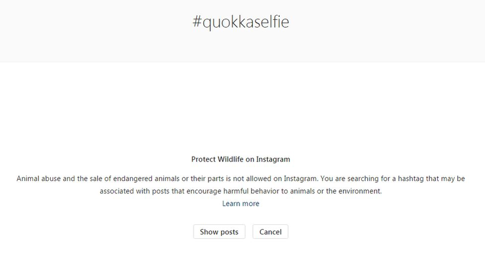 "An Instagram notice warning people about quokka selfies and animal abuse says: ""You are searching for a hashtag that may be associated with posts that encourage harmful behaviour to animals or the environment."""