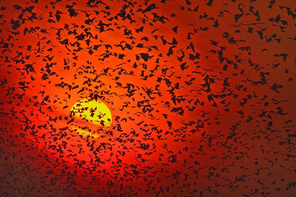 Silhouette photo of bats