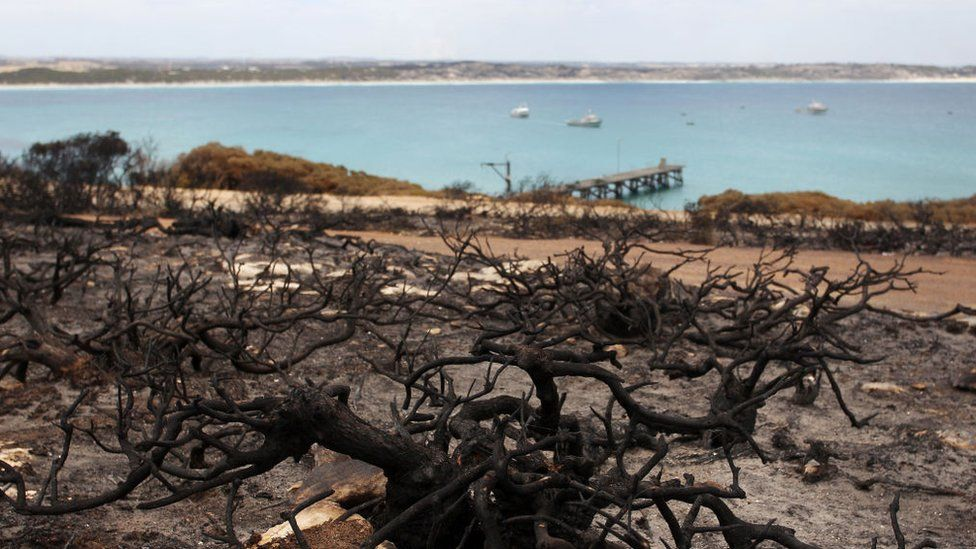Scorched bushland next to Vivonne Bay in Kangaroo Island