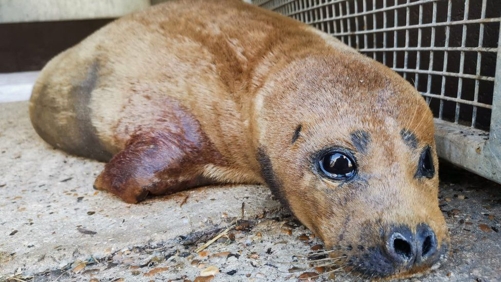 Freddie Mercury the seal dies after dog attack near Thames