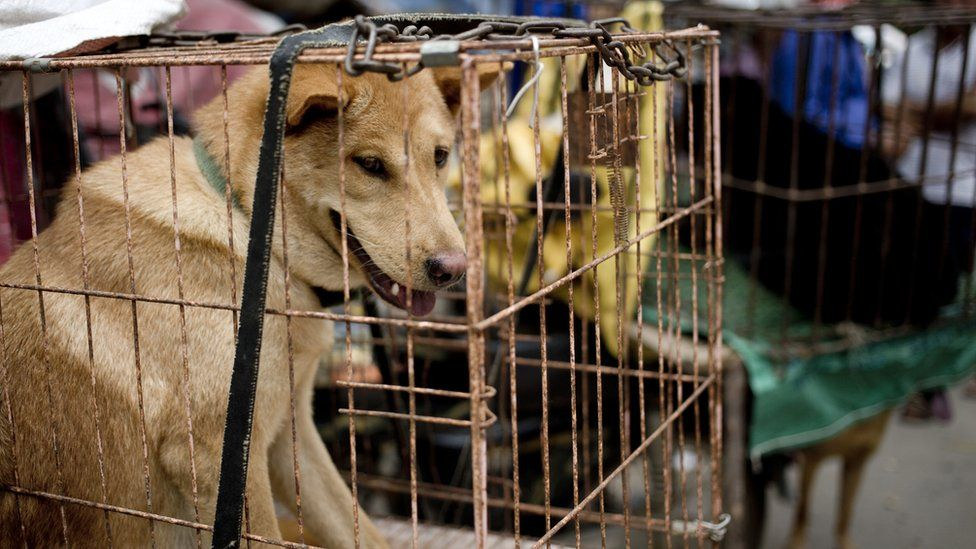 """Dogs are seen in cages for sale at a market ahead of a dog meat festival in Yulin in south China""""s Guangxi Zhuang Autonomous Region, Monday, June 20, 2016"""