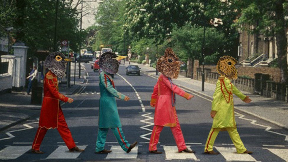 Four bird heads are superimposed on to the iconic Abbey Road image of The Beatles