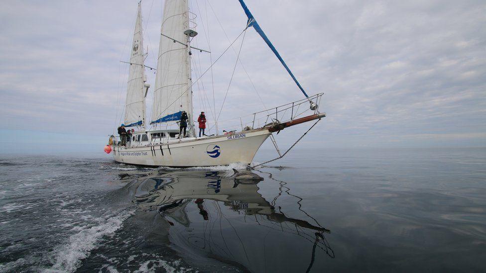 Trust's yacht Silurian