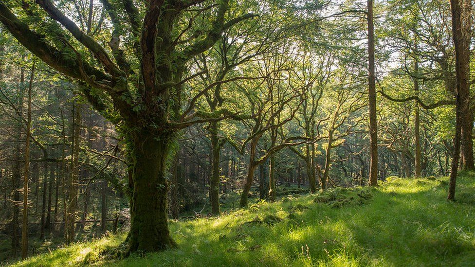 Native woodlands are a refuge for birds, butterflies, plants and insects