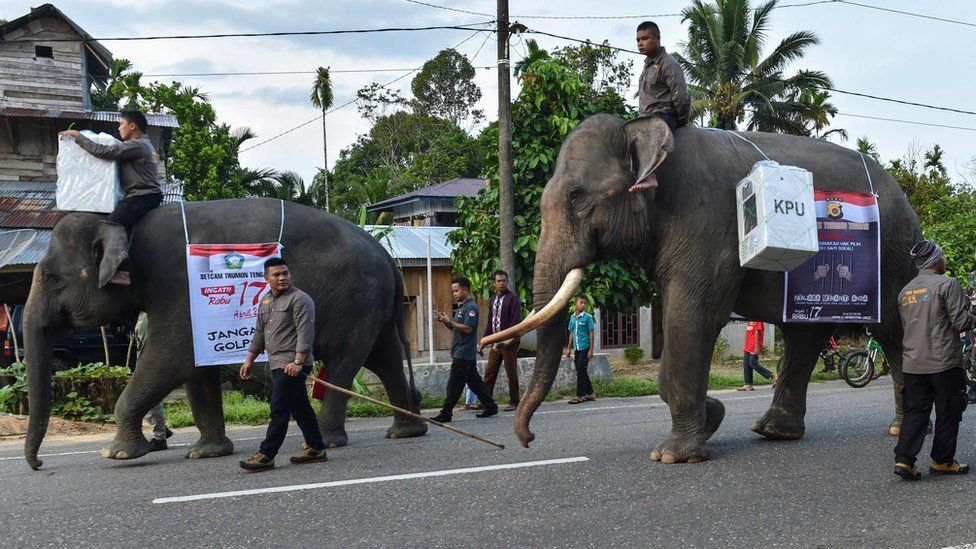 Indonesian mahouts ride elephants transporting election materials to a polling station during the presidential election in Trumon, Southern Aceh province on April 17, 2019. -
