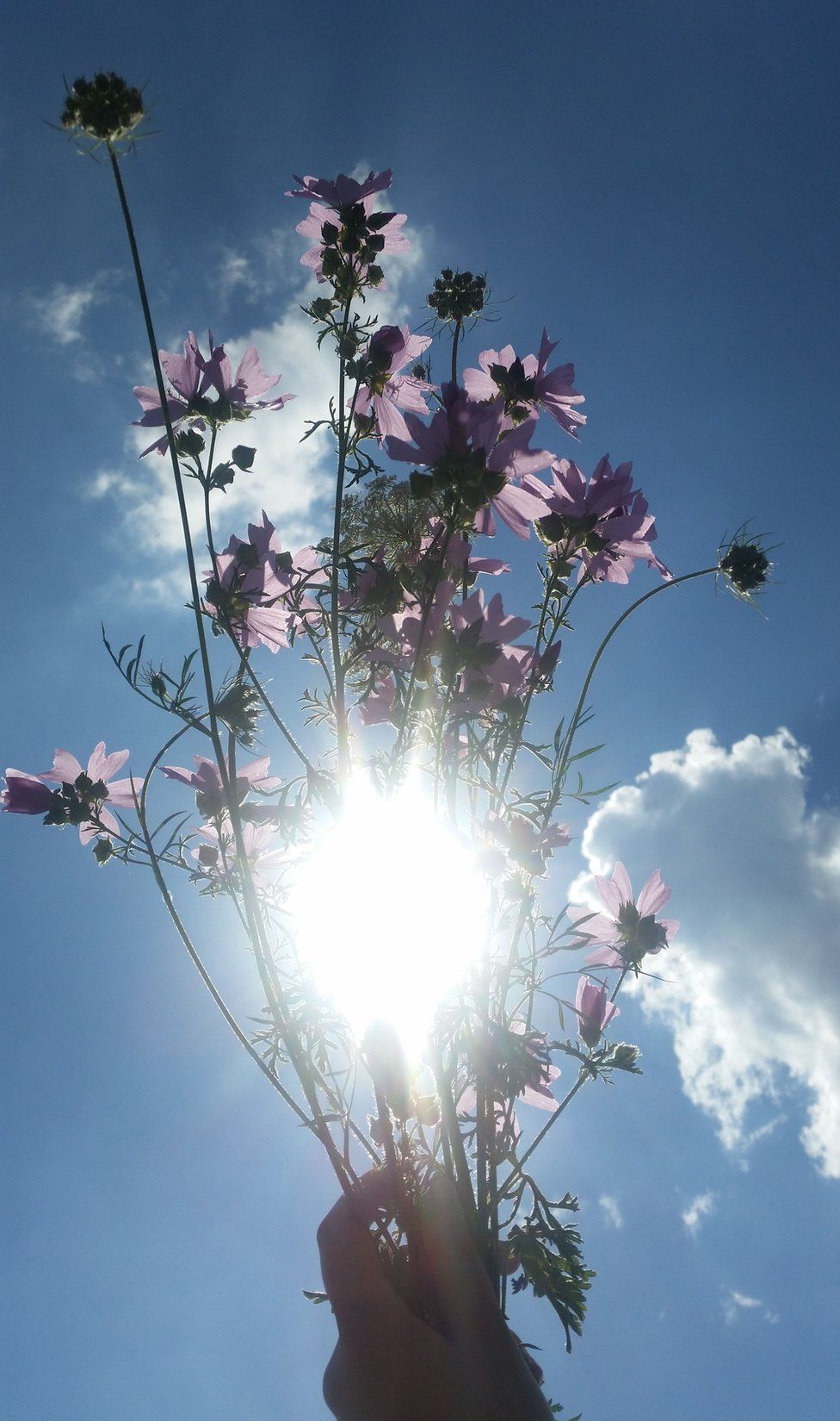 A hand holds a bouquet of flowers up against the sky