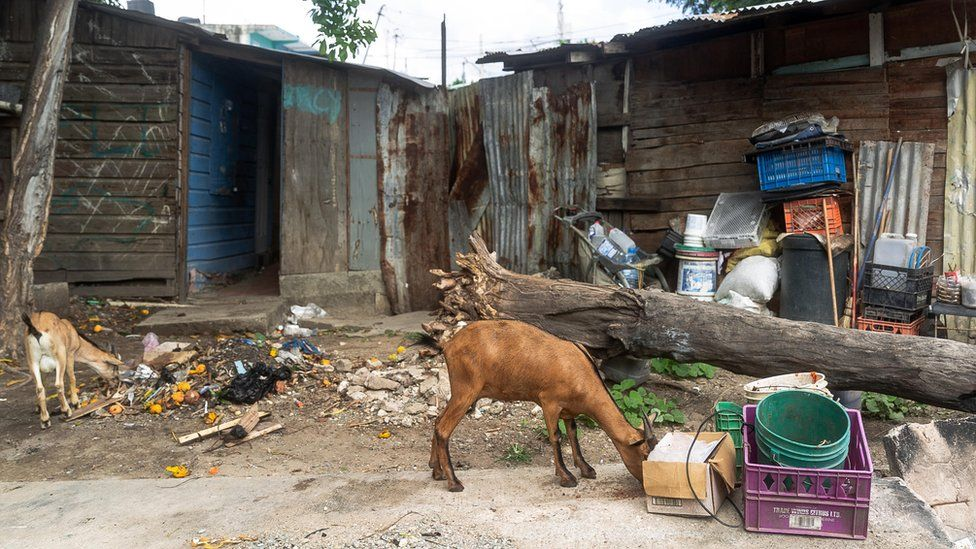 A goat searches for food outside some shacks
