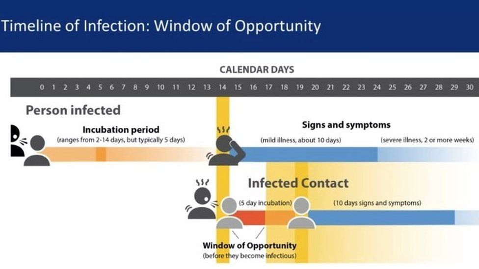 infection timeline