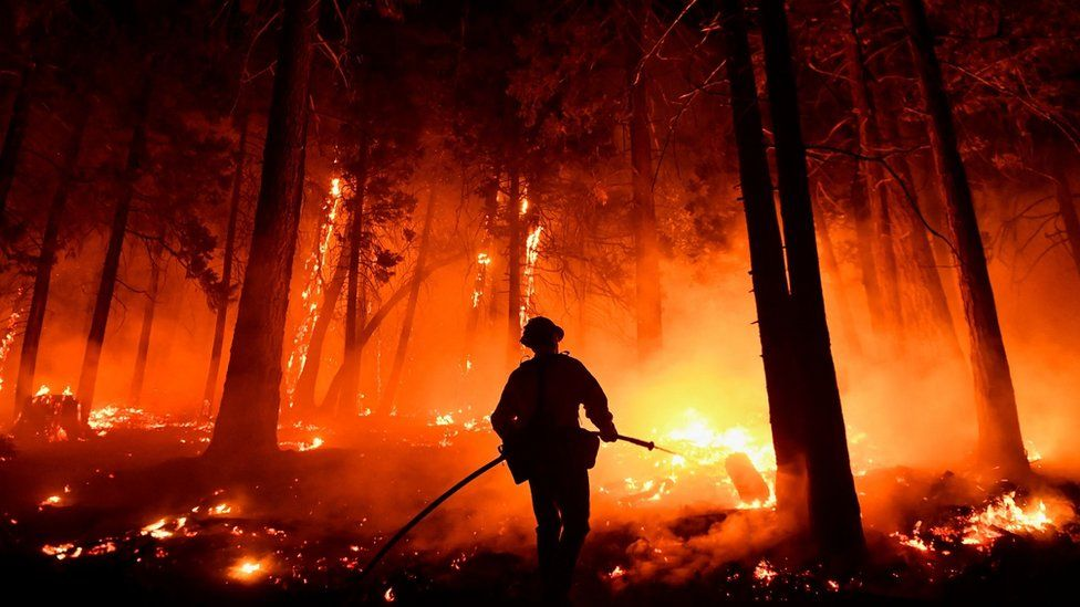California fires: General Sherman and other sequoias given blankets thumbnail