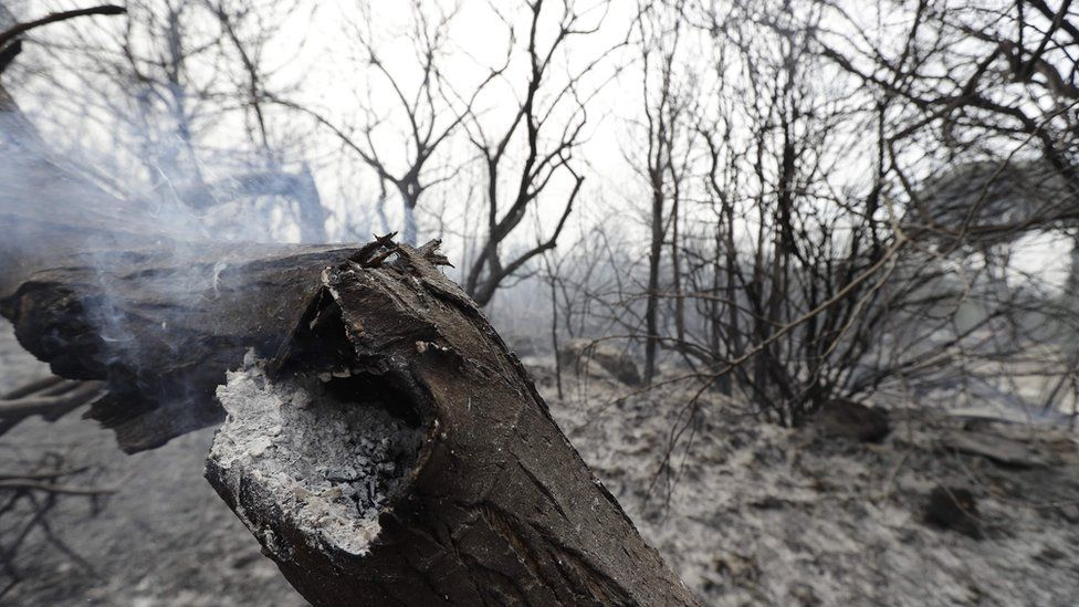 The remains of a forest in Lebanon after fires spread from the mountains