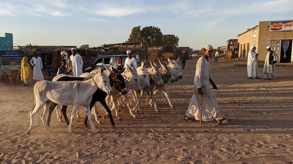 Nomadic herder with donkeys in El Fasher, north Darfur