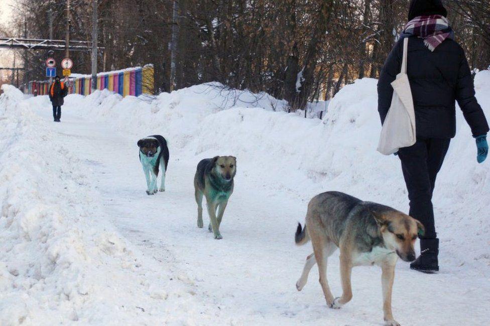 Dogs with green fur, Podolsk, 18 Feb 21