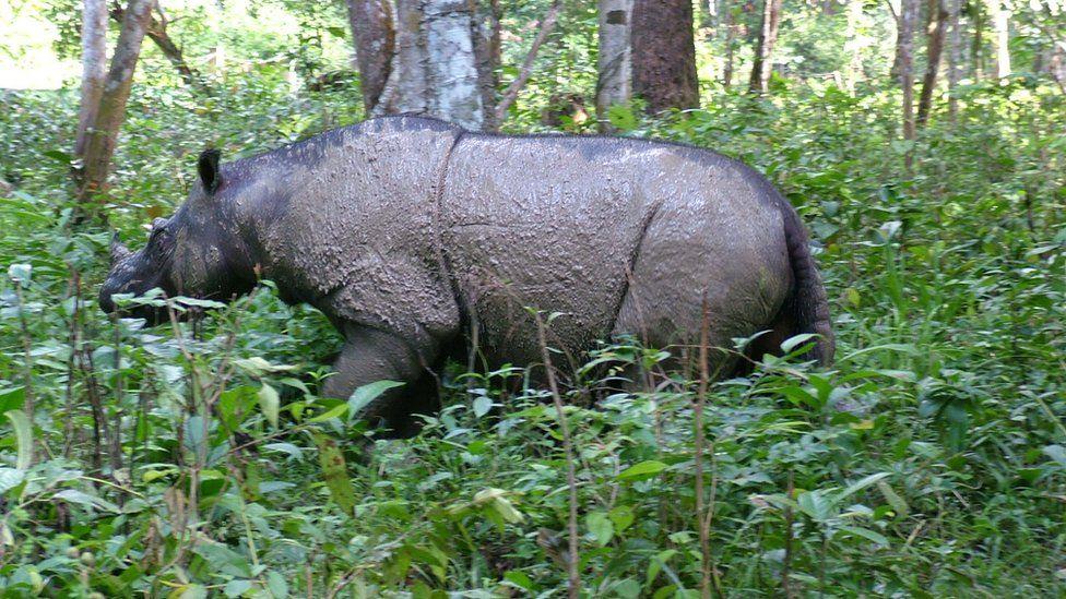 Rosa the rhino