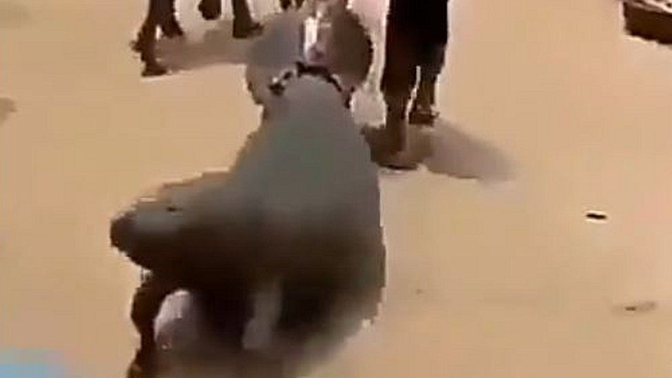 A screengrab from the video shows the manatee being dragged down a dusty road