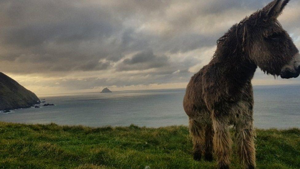 Donkey on Great Blasket Island