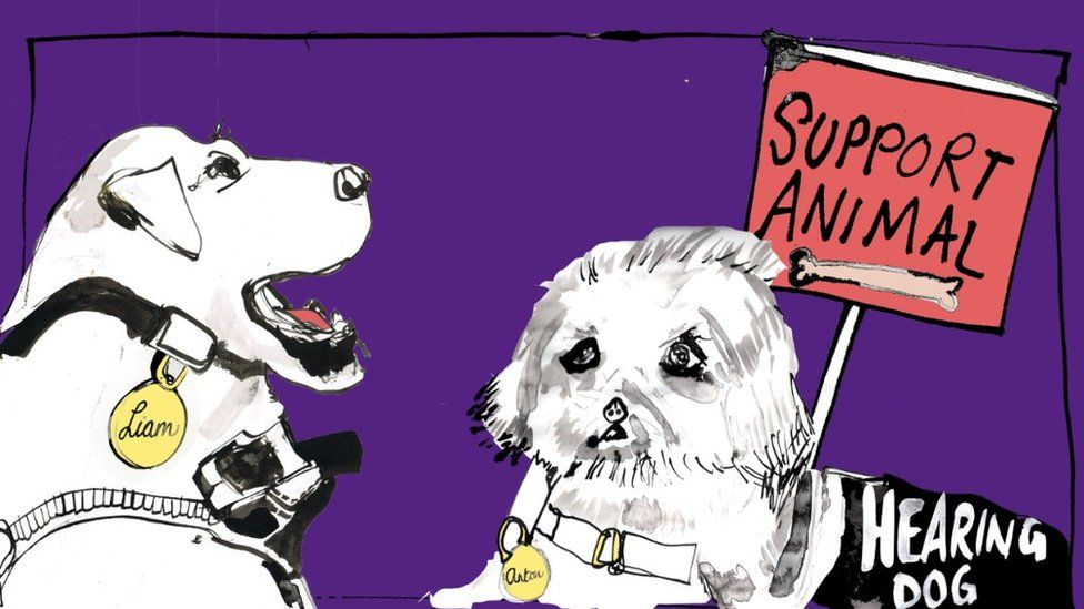An illustration of two support dogs - one guide and one hearing dog