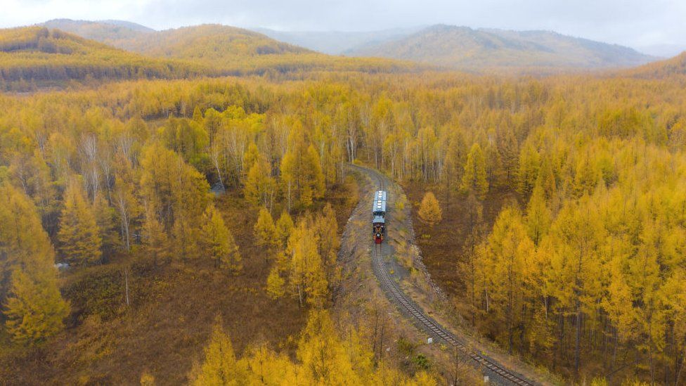 Mongolia's boreal forests