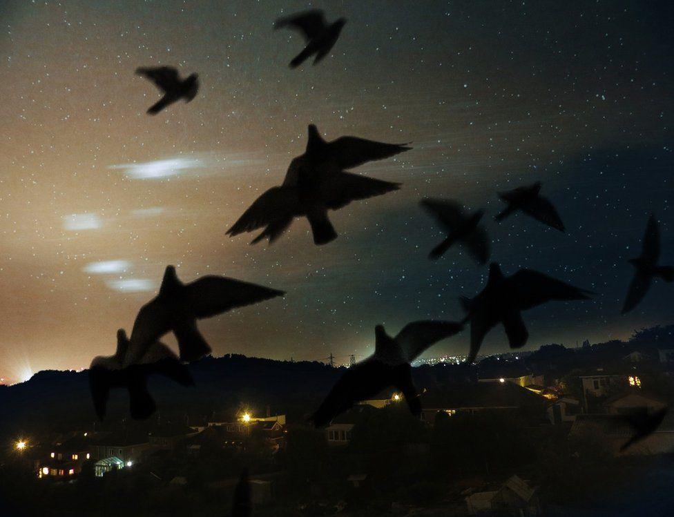 Pigeons take flight