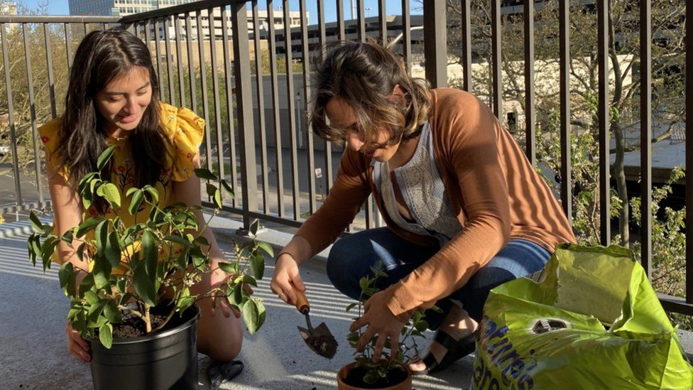 """""""My first call - I was really nervous."""" says Paulina Luna Martinez, left, gardening with her housemate Elsie Gonzalez in New Haven"""