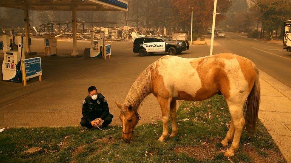 A horse eats grass near a gas station