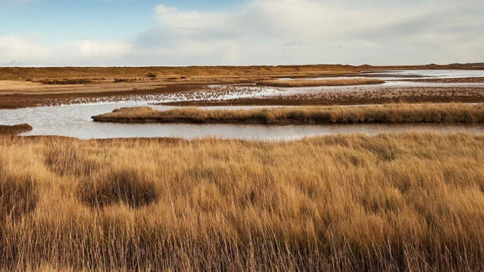 Salthouse reed beds