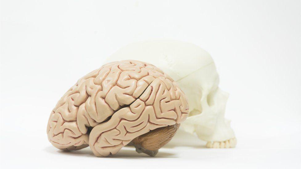 Como funciona o cérebro das pessoas criativas