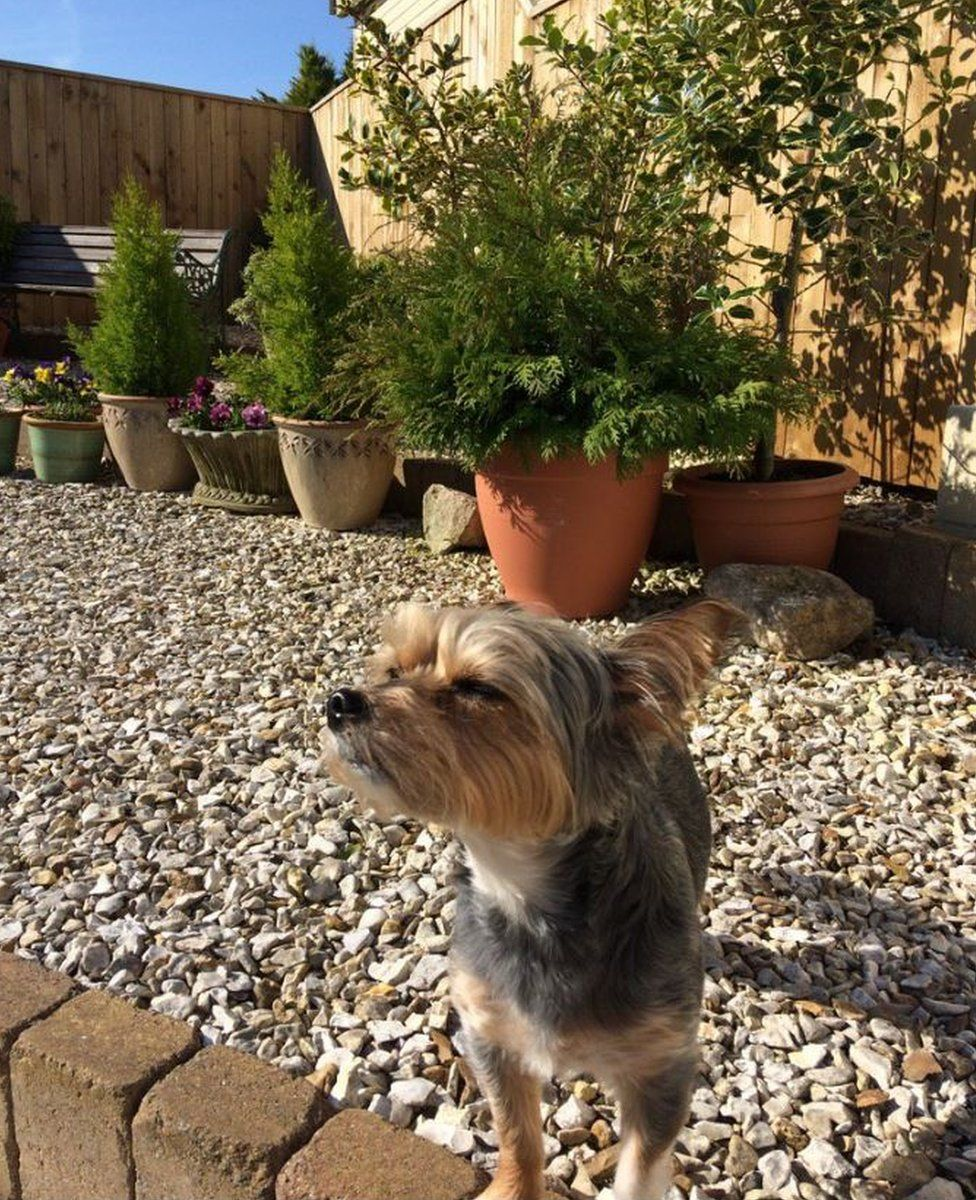 Rosie the dog in the sun