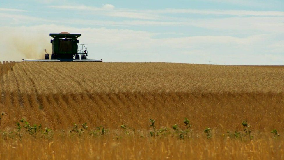 Machinery in wheat field