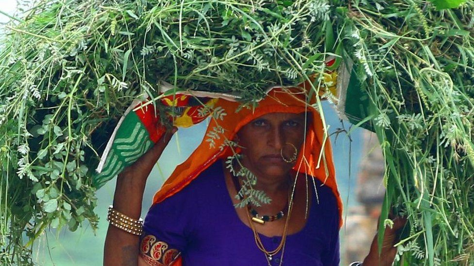 Woman carrying fodder on her head on outskirts of village in Rajasthan state