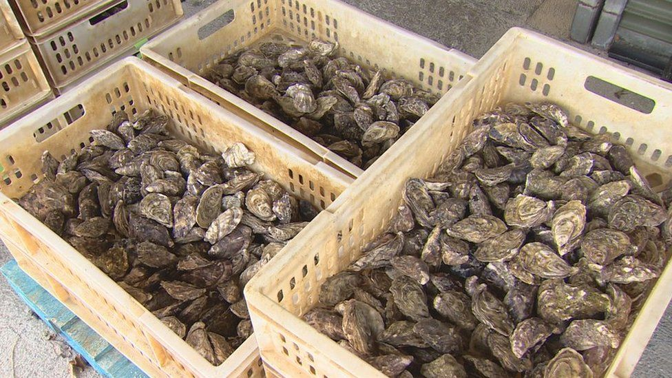 Oysters in boxes