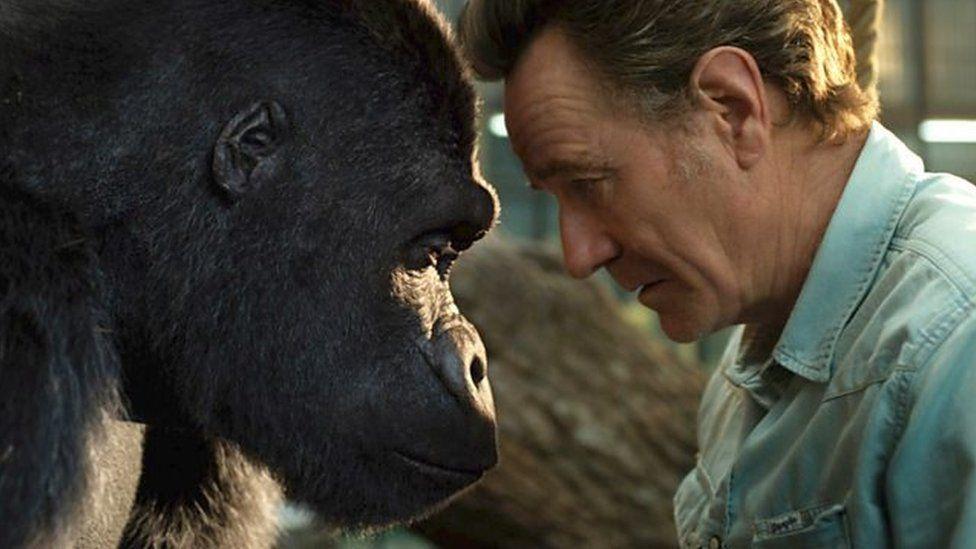 Ivan y gorila a Mack, cymeriad Bryan Cranston