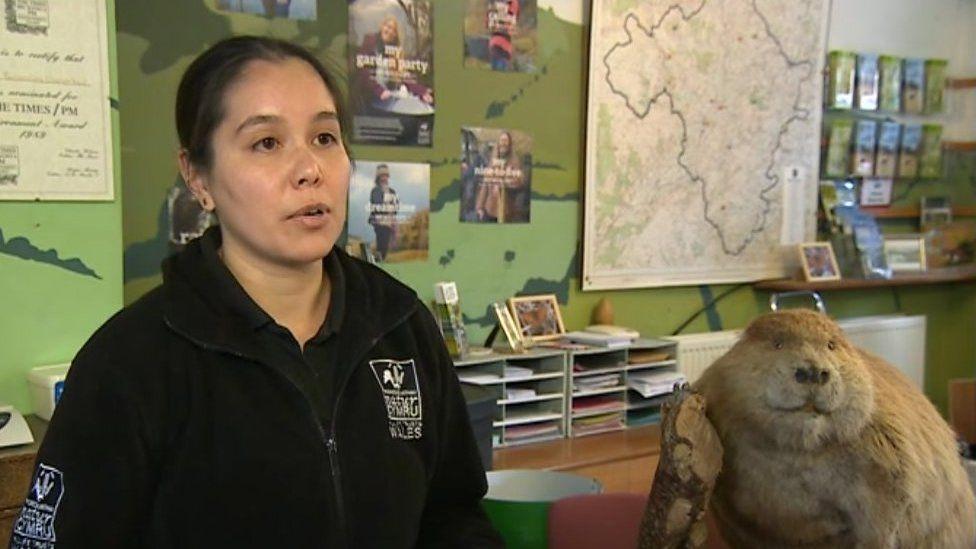 Alicia Leow Dyke o Brosiect Afancod Cymru