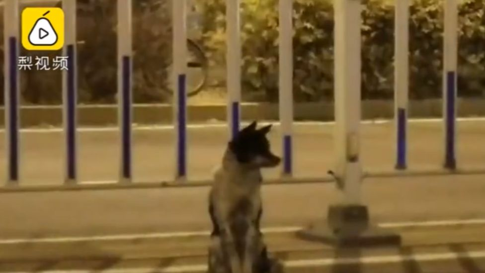 Dog sat by road