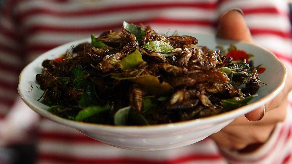 Vendor sells crickets