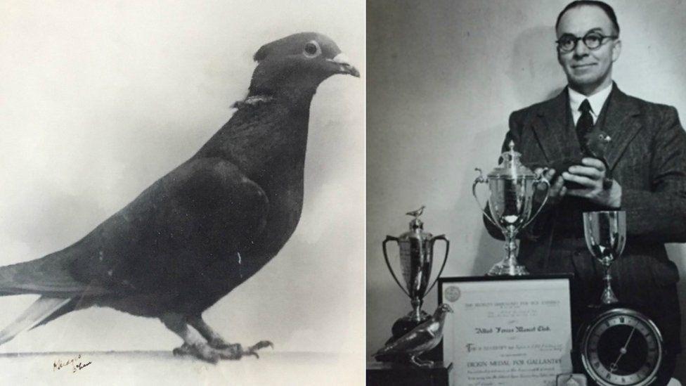 Британский служебный голубь удостоился памятной таблички