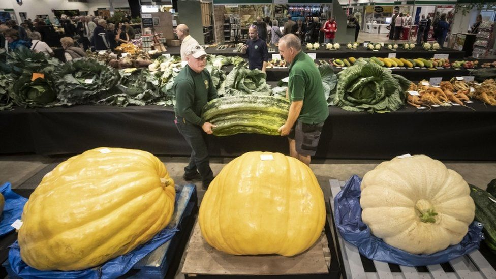 Two men carry a giant marrow as judging takes place