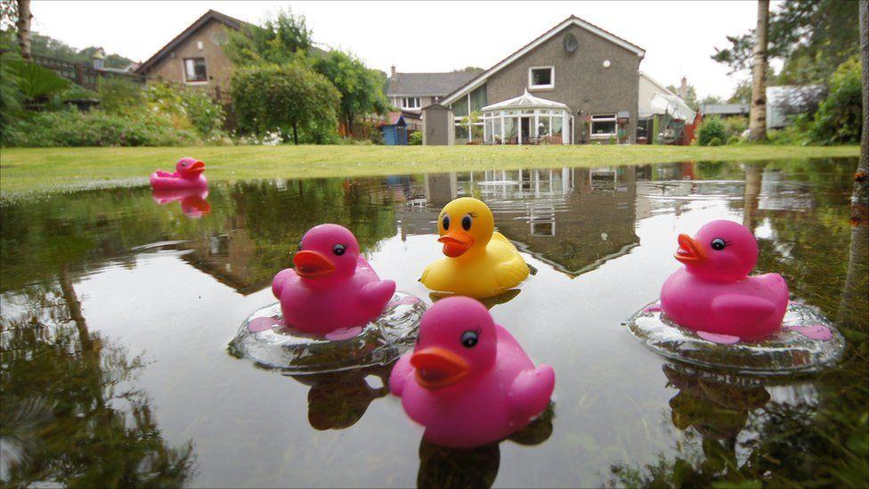 'Duck pond'