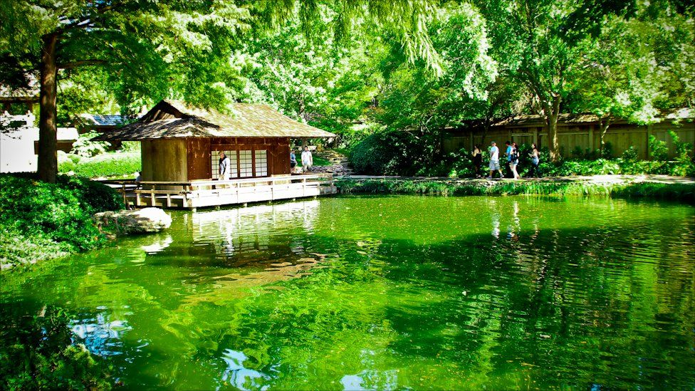 A Japanese style garden