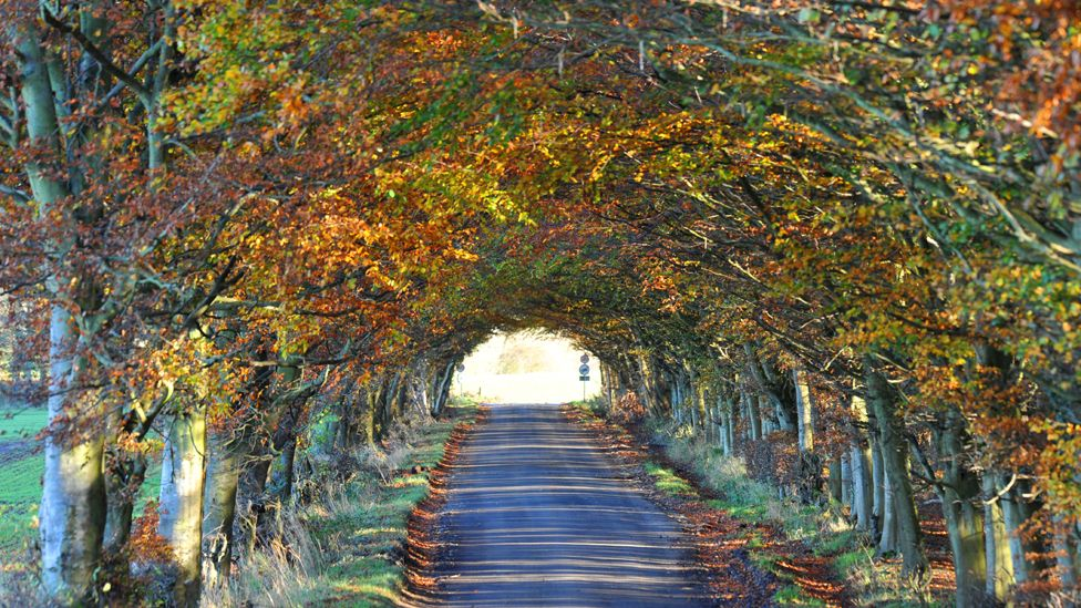 Trees line both sides of a road