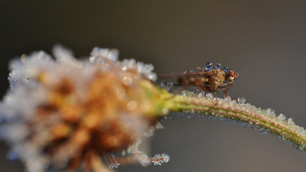 An insect on a frosty plant stalk