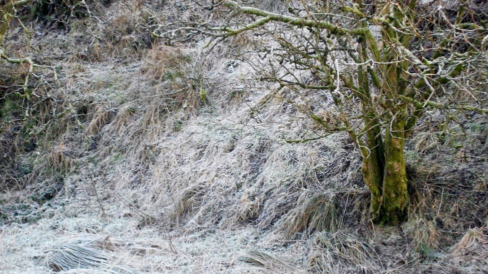 Tree and ground covered in frost