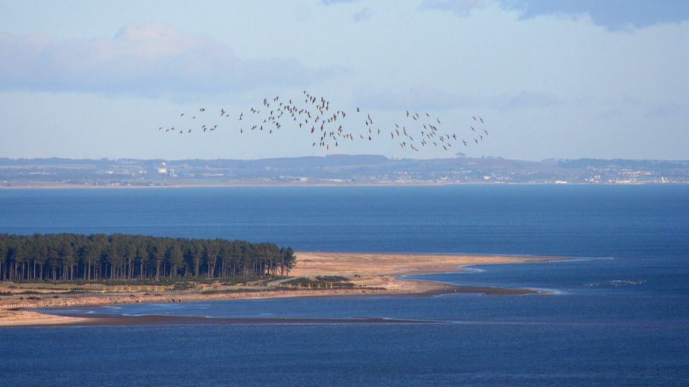 Reres Wood with the Tay Estuary and Angus coast in the background