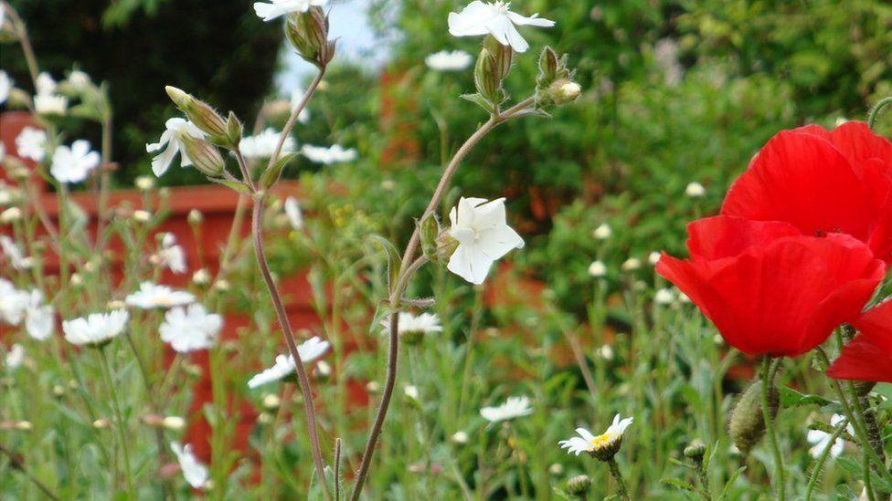 Wild flowers in a garden