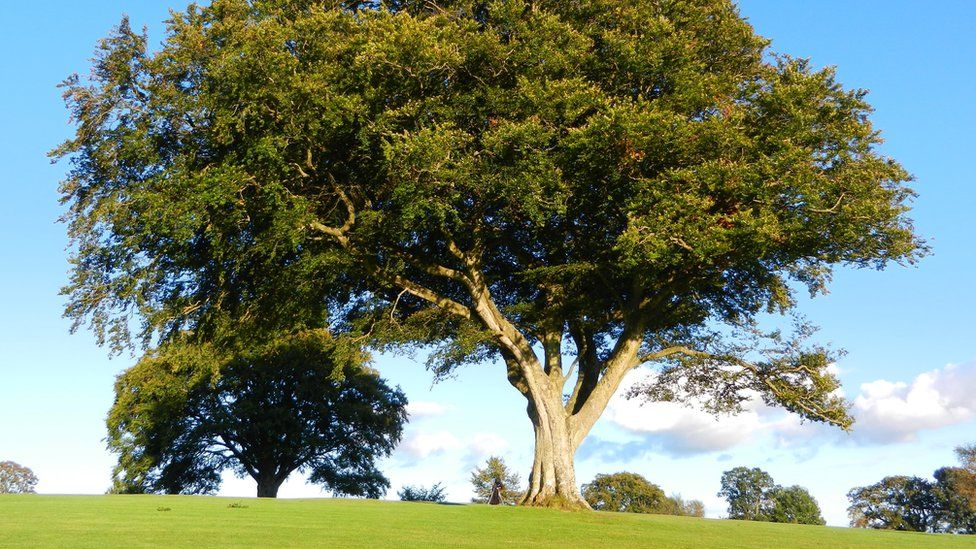 Tree on a golf course