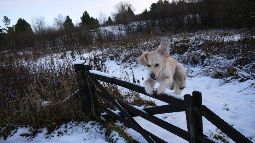 Jura jumps a gate