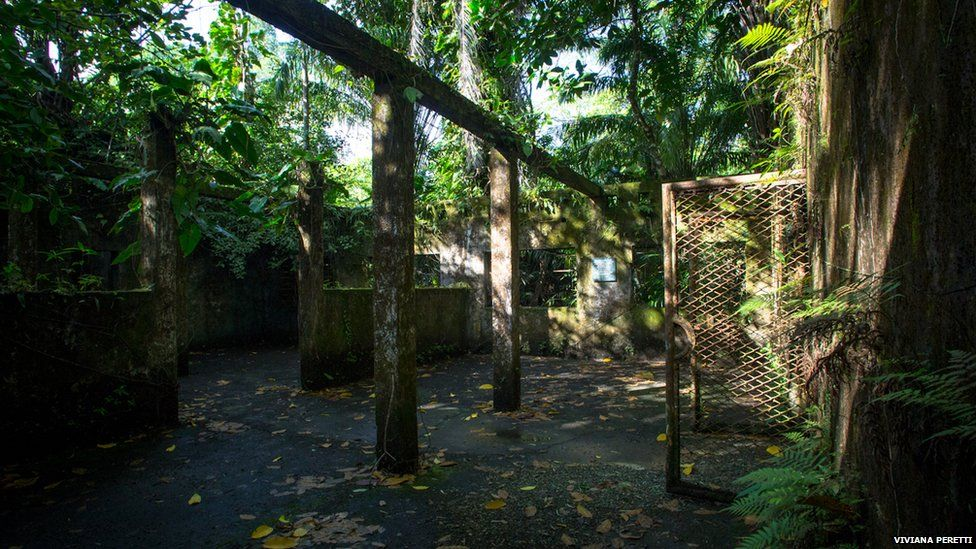 Overgrown barracks on Gorgona island