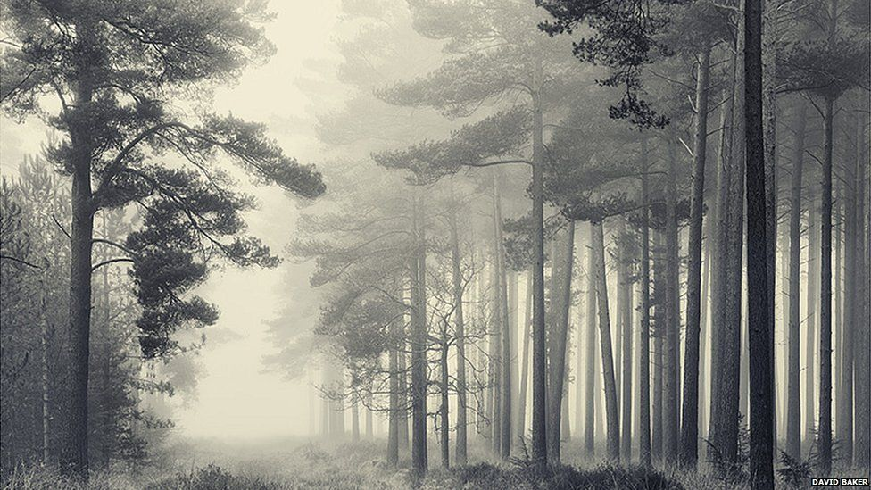 The New Forest, Hampshire by David Baker